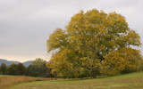 Tree of Bernheim by chris_f2005, photography->landscape gallery