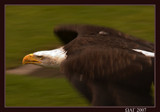 his majesty in action by wimgroen, Photography->Birds gallery