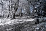 Narnia by biffobear, photography->manipulation gallery