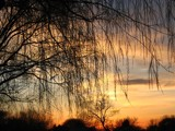 A willows view of the setting sun by ghostrider2112, Photography->Sunset/Rise gallery