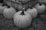 Harvest for Samhain by Sinestro, contests->b/w challenge gallery