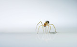 Itsy Bitsy by dmk, Photography->Insects/Spiders gallery