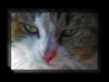Beware of the cat - rework by Hottrockin, Rework gallery