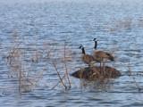 Stranded? by Jimbobedsel, Photography->Birds gallery