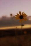 Sunrise or Sunset by meiamafreak, Photography->Flowers gallery