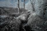Woodland stream by biffobear, photography->general gallery