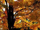 A Tree's Golden Harvest! by marilynjane, Photography->Landscape gallery