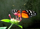 Captured by rhelms, photography->butterflies gallery