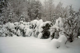 That's Right....twenty-eight inches of SNOW!!! by verenabloo, Photography->Nature gallery