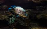 Fish2 by zunazet, photography->underwater gallery