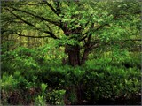 And Let the Ferns Rejoice! by Pjsee16, photography->landscape gallery