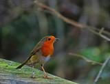 Patience by biffobear, photography->birds gallery