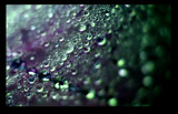 Amethysts & Emeralds by jesouris, Photography->Macro gallery