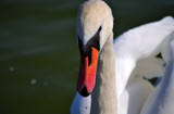 The Look #7 by braces, photography->birds gallery