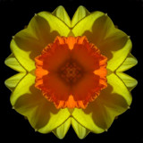 Daffodilidascope by ccmerino, Photography->Manipulation gallery