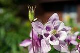 Flower 4 by Stevenn120, Photography->Flowers gallery