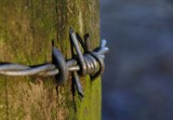 barbwire by ro_and, photography->macro gallery