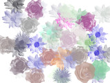 My Flower Collection by Adon, photography->manipulation gallery