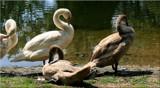 Riverside Preening by tigger3, photography->birds gallery