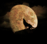 The Howling by biffobear, photography->manipulation gallery