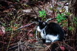 I'm Just Calling This One Cat by Eubeen, photography->pets gallery