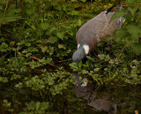 Drinky-poos.... by biffobear, photography->birds gallery