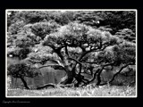 tree architecture by dangeline, Photography->Landscape gallery