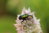Irridescence on the fly by Salishutter, photography->insects/spiders gallery