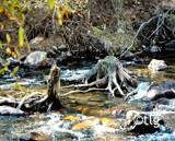 Stumpin' by tielji, Photography->Landscape gallery