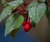 Rainy day by biffobear, photography->flowers gallery