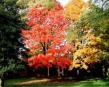 Ladue Fall by jojomercury, photography->gardens gallery