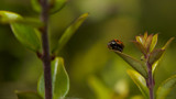 Decision time by coram9, photography->insects/spiders gallery