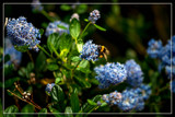 Work In Progress by corngrowth, photography->nature gallery
