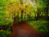 Thornley woods by biffobear, photography->nature gallery
