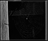 Itsy Bitsy Spider by Jimbobedsel, contests->b/w challenge gallery