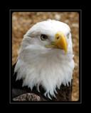 Sweet Stare by Hottrockin, Photography->Birds gallery