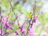 Sing A Song Of Spring by tigger3, photography->birds gallery