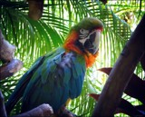 Al Kapena by LynEve, photography->birds gallery