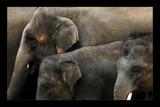 Unity by kodo34, Photography->Animals gallery