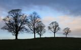 treescape... by fogz, Photography->Landscape gallery