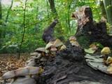 Shroom tree by Paul_Gerritsen, Photography->Mushrooms gallery