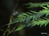 Fern by Samatar, Photography->Nature gallery
