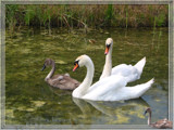 Happy Family by wimida, Photography->Birds gallery