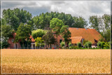 Ripening Wheat 1 by corngrowth, photography->landscape gallery