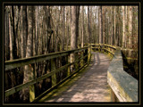 sidewalk through the swamp by jeenie11, Photography->Landscape gallery