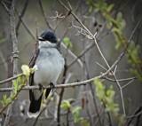 Bird # 51 by picardroe, photography->birds gallery
