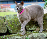 Molly  -  The Mountain Goat! by braces, photography->pets gallery