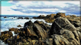 Pacific Grove II by Flmngseabass, photography->shorelines gallery