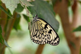 Tropical Butterfly (No2) by Heroictitof, Photography->Butterflies gallery
