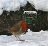 Robbie says by biffobear, Photography->Birds gallery